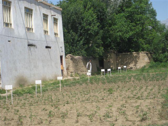 M. Ondeková, Afganistan, máj 2010: Políčko pri školiacom centre