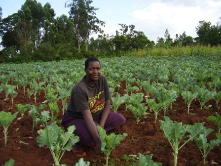 Pestovanie_sukuma_wiki_-_male_podnikanie