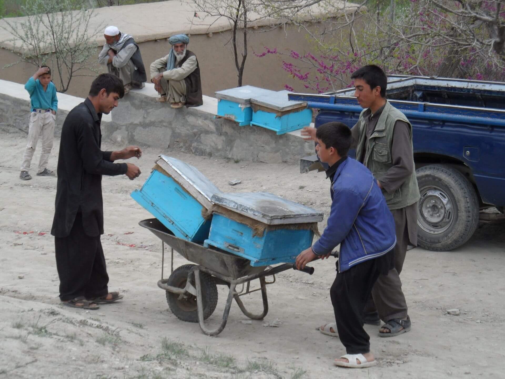 afganistan vcely