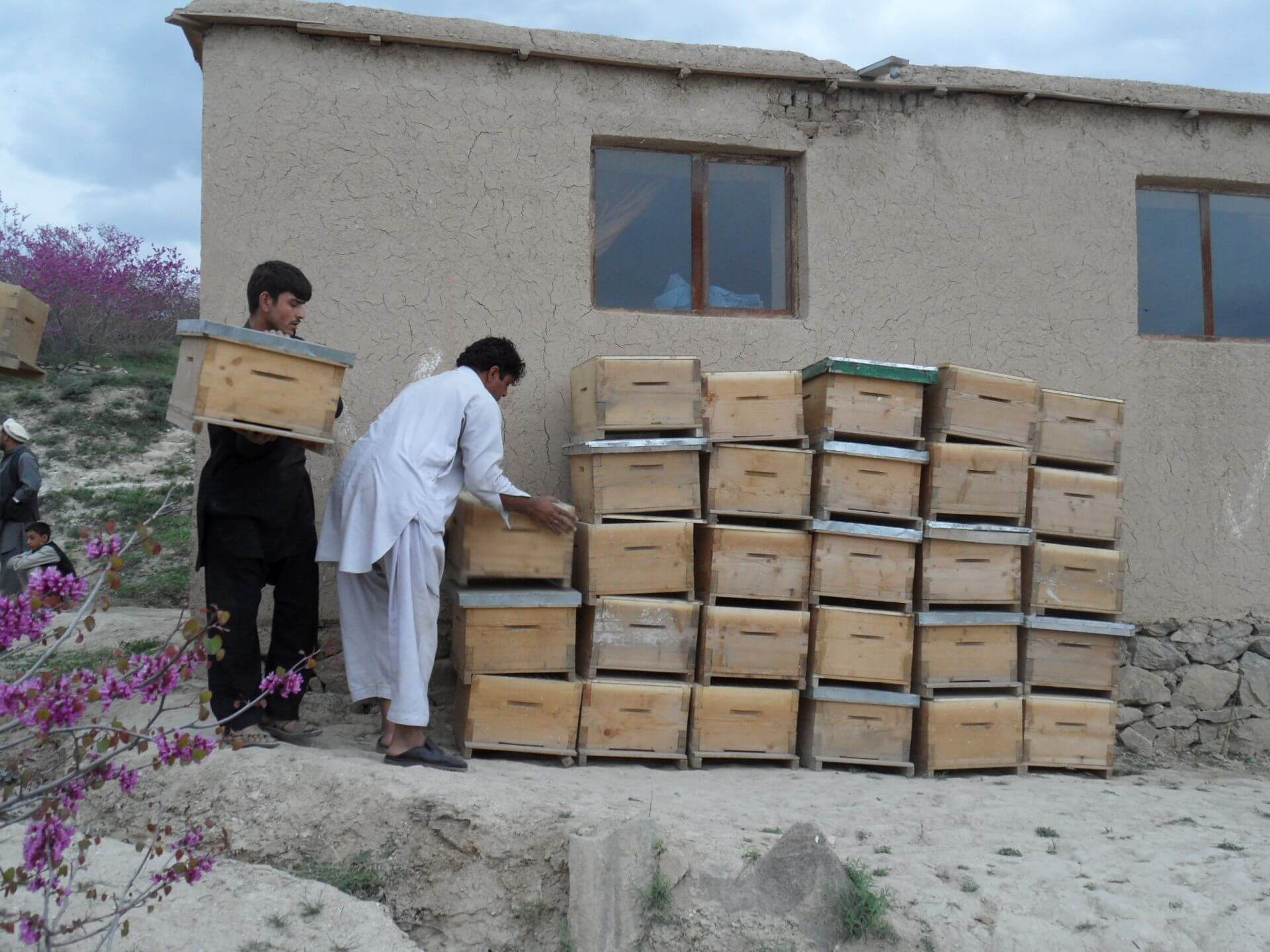 afganistan vcely6
