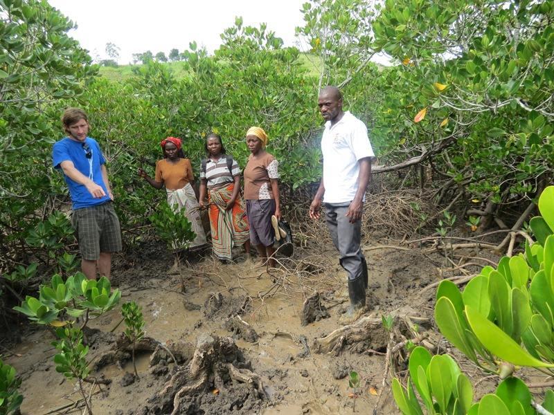 mangrovniky2