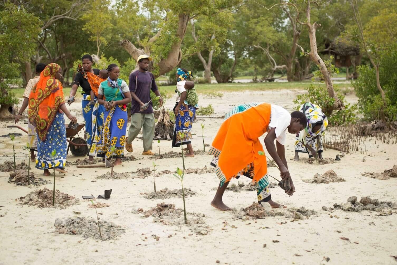 mangrovniky5